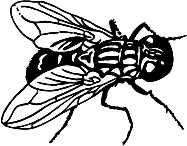 les mouches n 39 aiment pas clous de girofles piqu s ds un. Black Bedroom Furniture Sets. Home Design Ideas