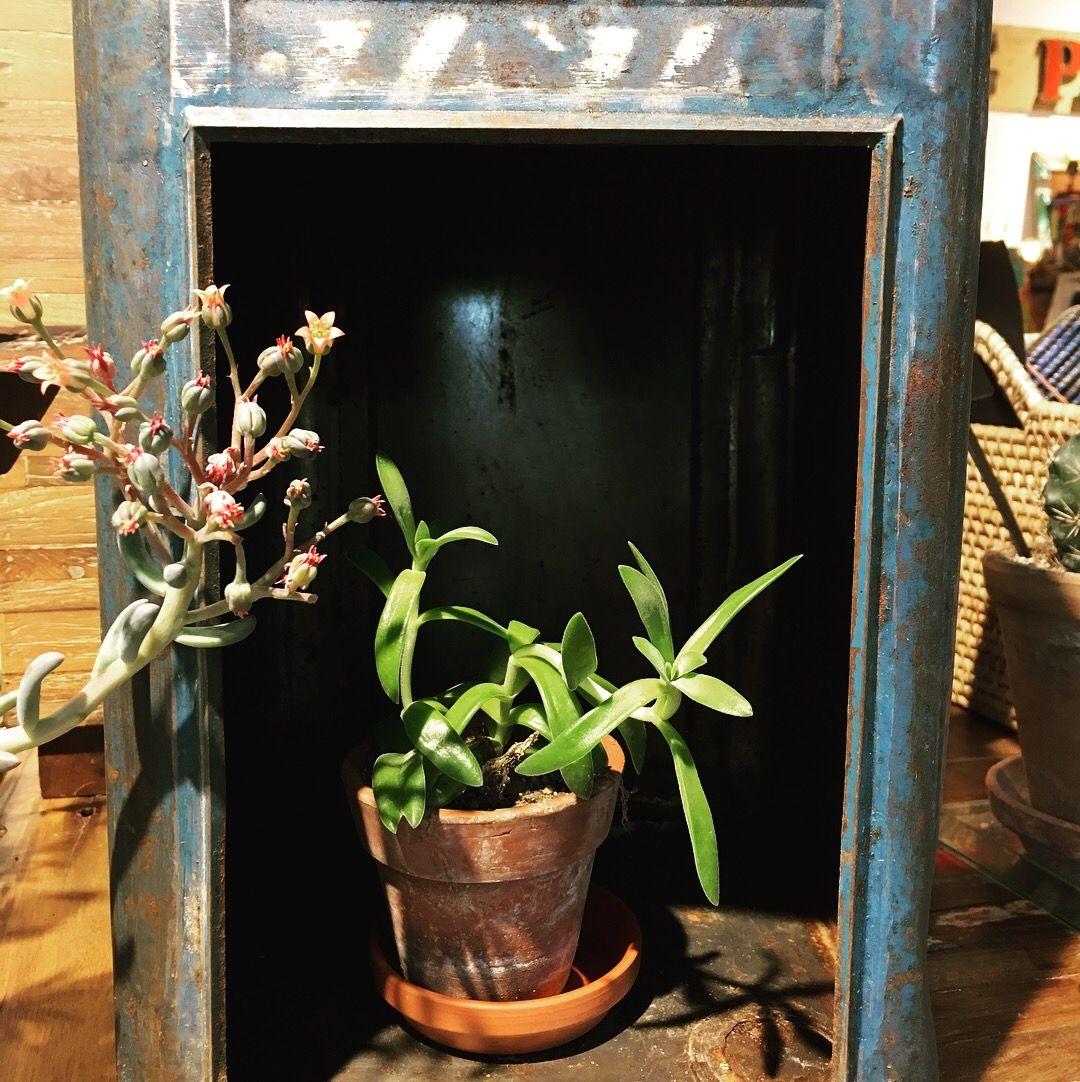 Petite plante sèche dans une lanterne en métal (met