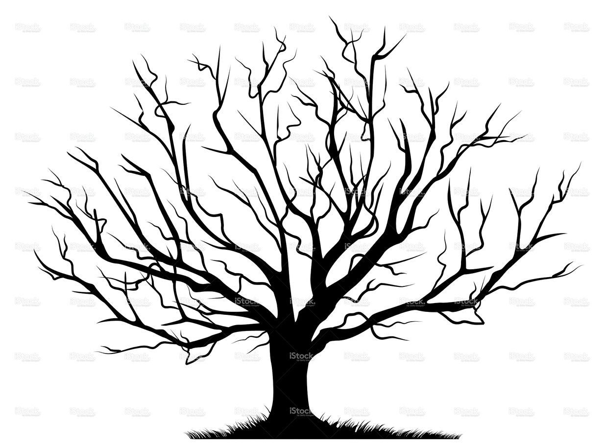 Deciduous Bare Tree With Empty Branches Black Silhouette Isolated On Tree Stencil Tree Drawing Bare Tree