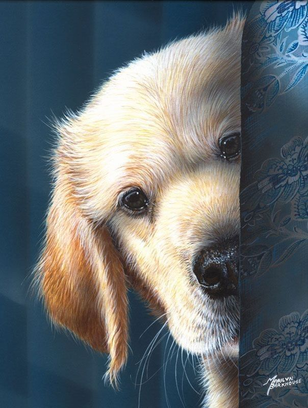 Pin By Julley Chin On Dogs Dog Art Dog Paintings Puppy Art