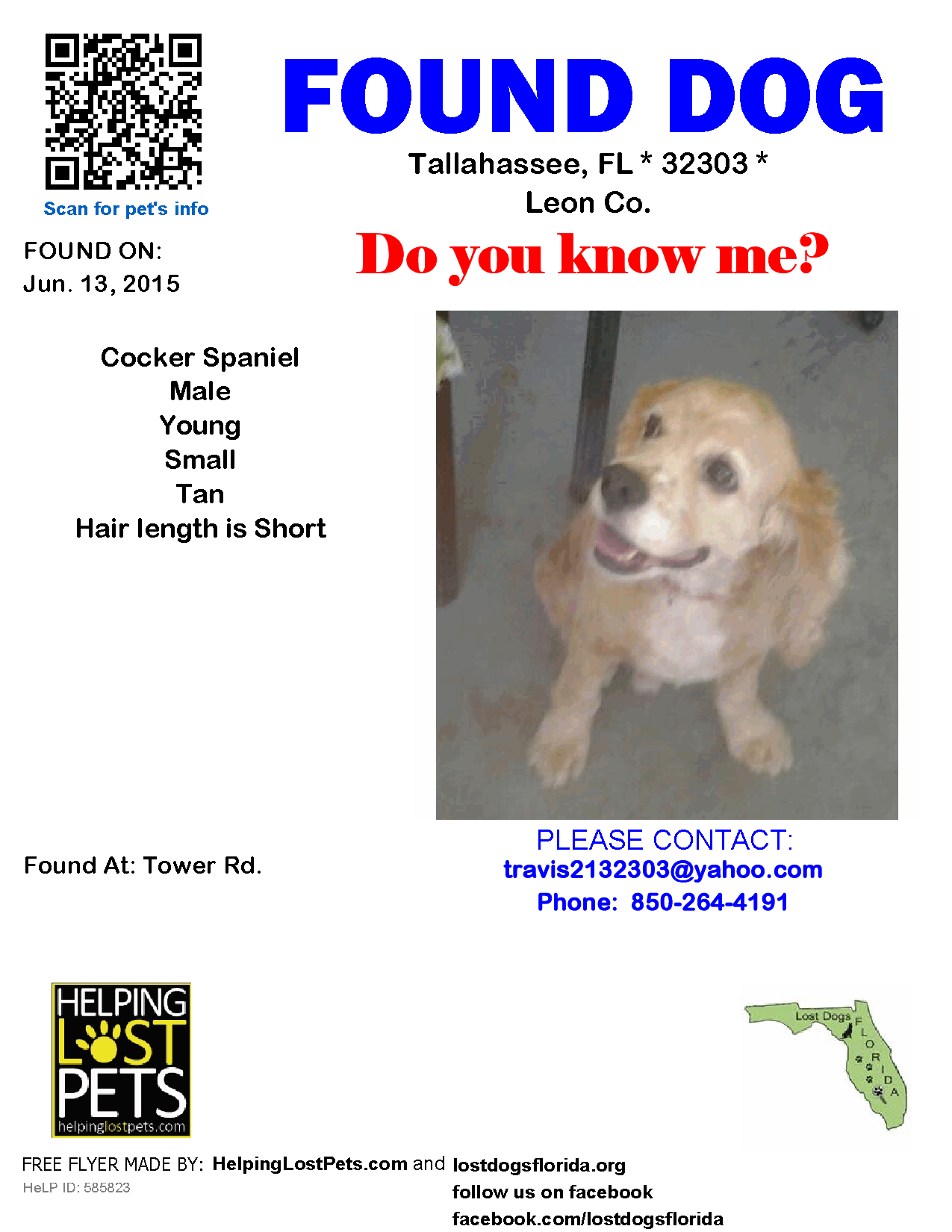 Found Dog Cocker Spaniel Tallahassee Fl United States 32303 On June 13 2015 13 00 Pm Dogs Pitbulls Dog Holiday