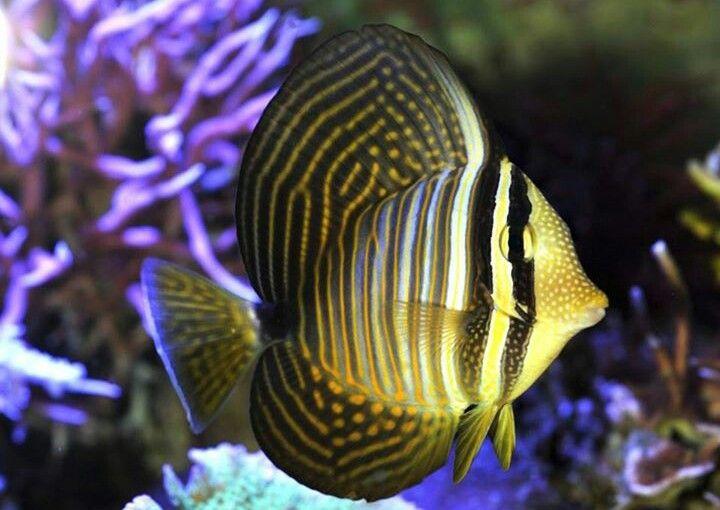 Pin On Fish Tang