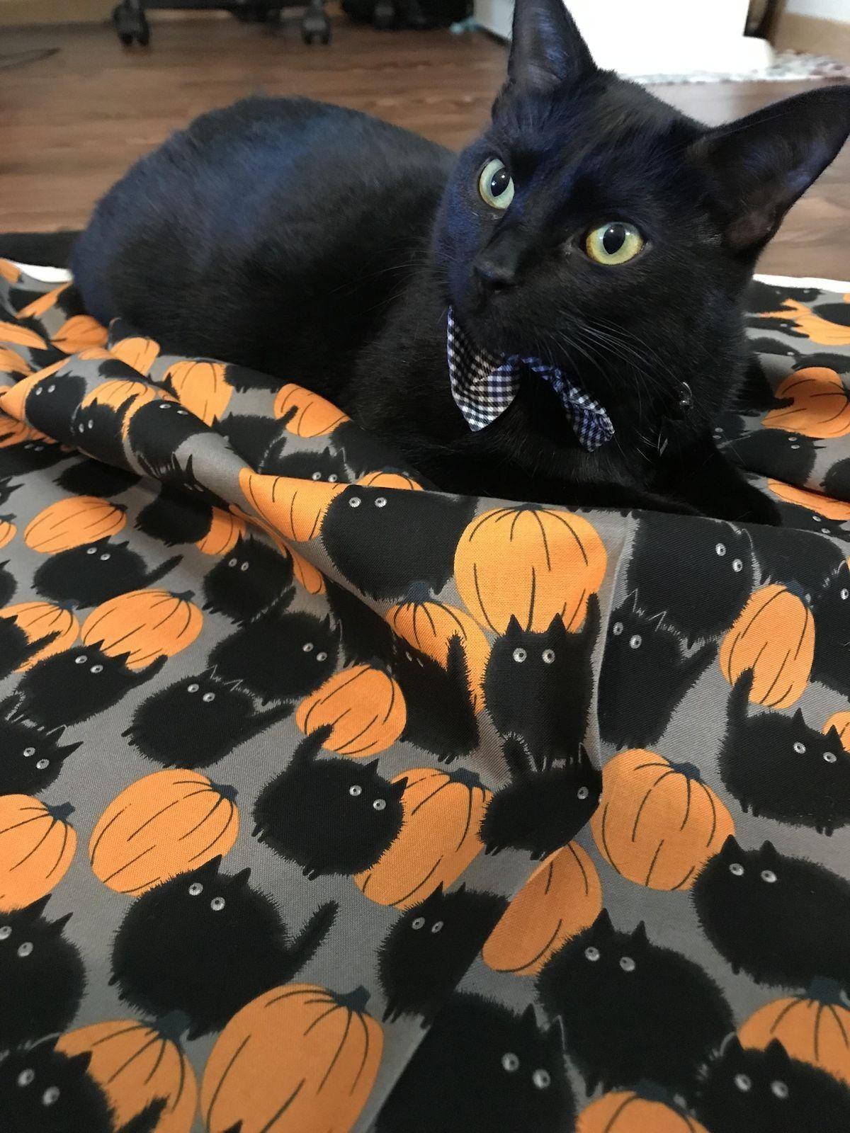 Pin by Jo =^,^= Allen on _Halloween & Fall Cats