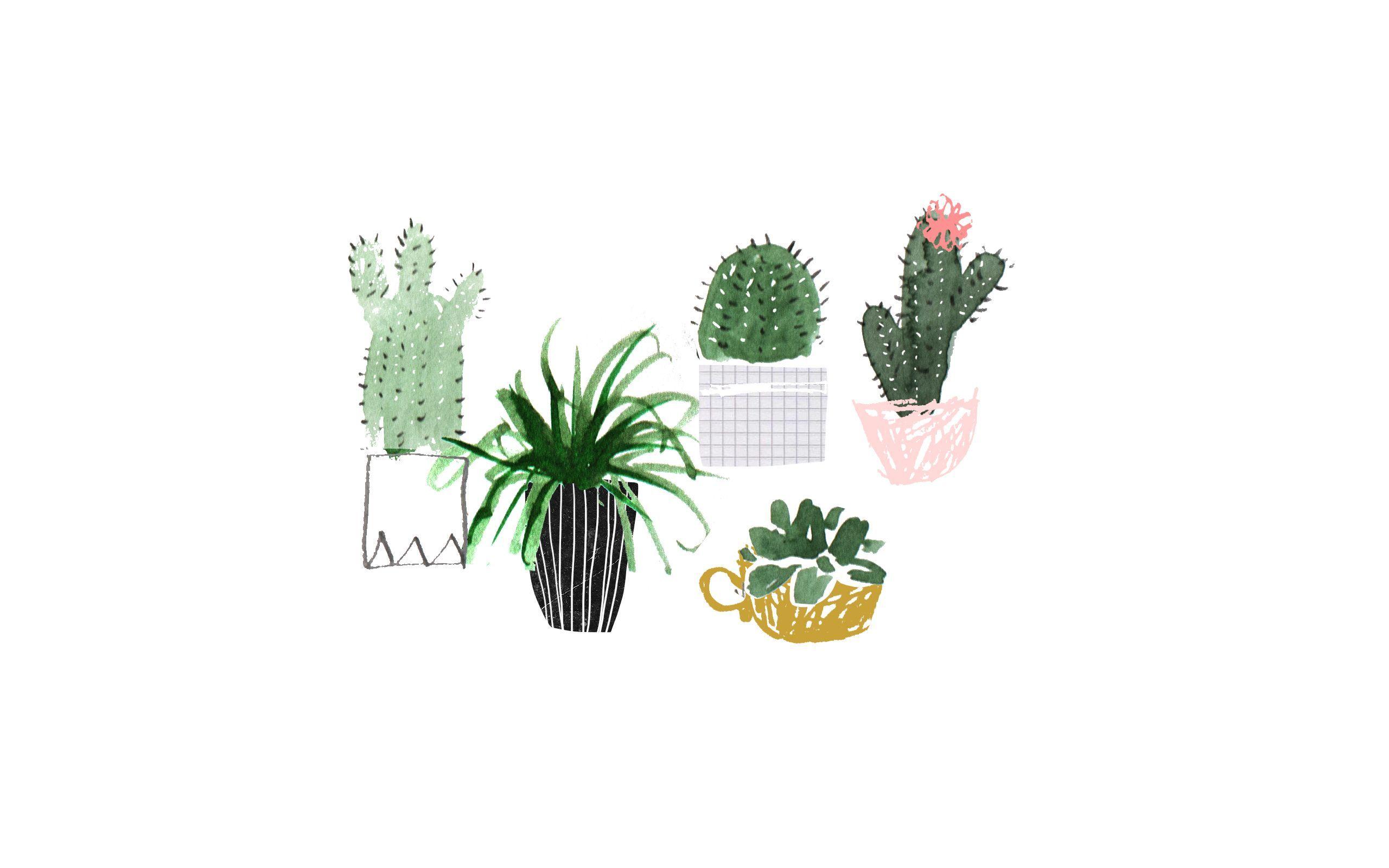 Cactus Wallpaper For Computer Watercolor Desktop Wallpaper Plant Wallpaper Pastel Background