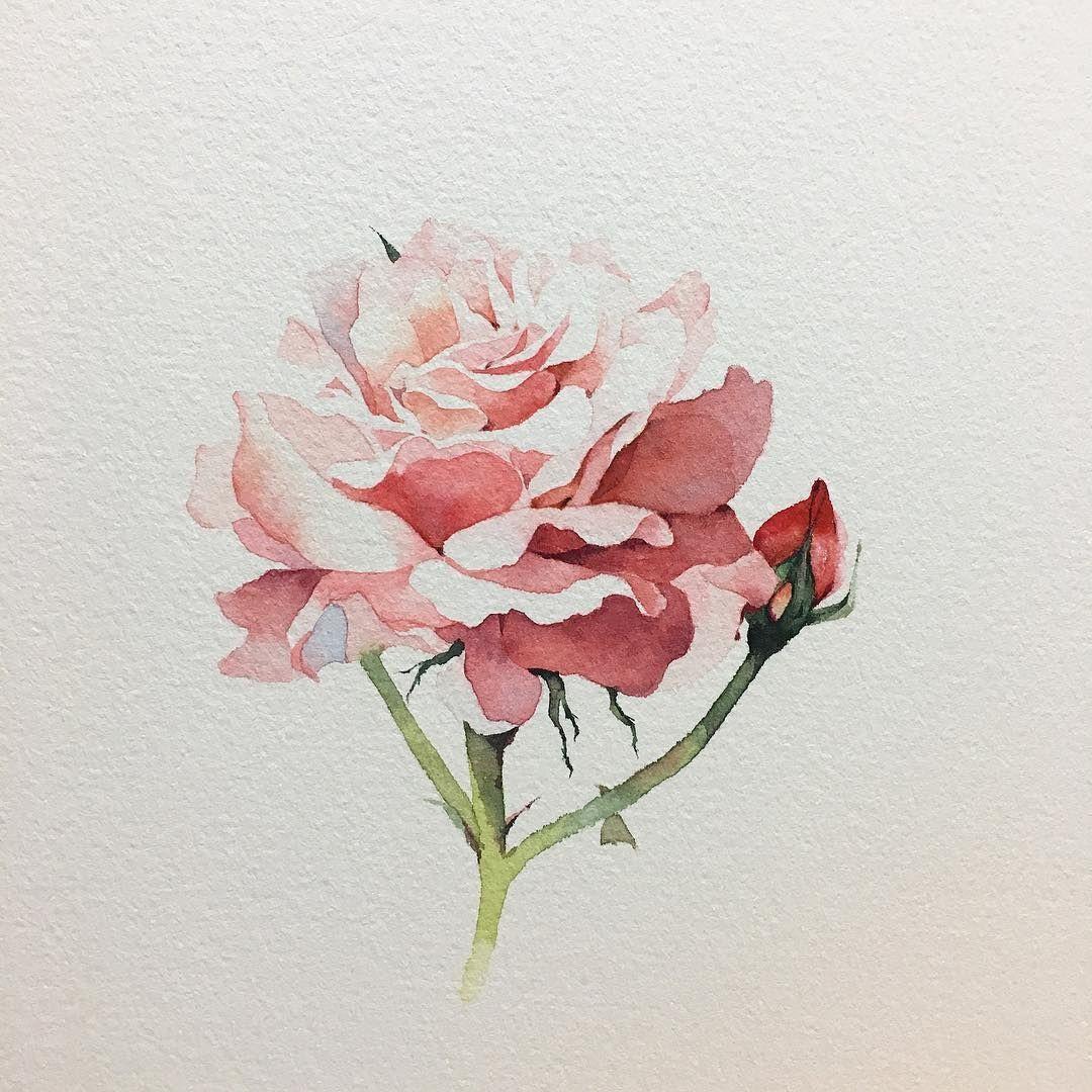 ถ กใจ 23k คน ความค ดเห น 90 รายการ Watercolor Illustrations