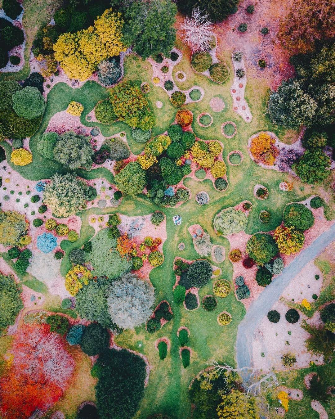 Landscape Image Australian Native Wall Art Fungi Photography Print Decor Landscape photograph Landscape Artwork