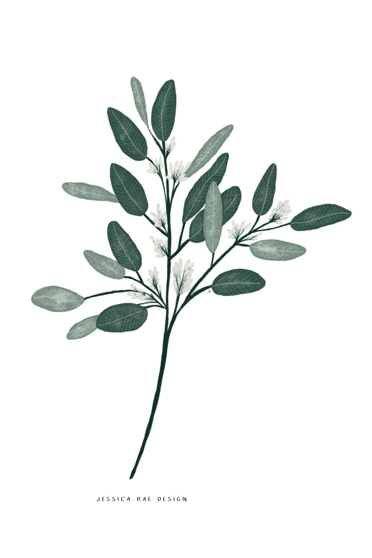 Photo of Seeded eucalyptus illustration, botanical prints, drawing