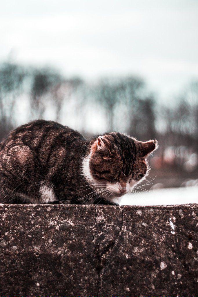Cats Craigslist Catsearsarehot Referral 510771963 Cat Vs Dog