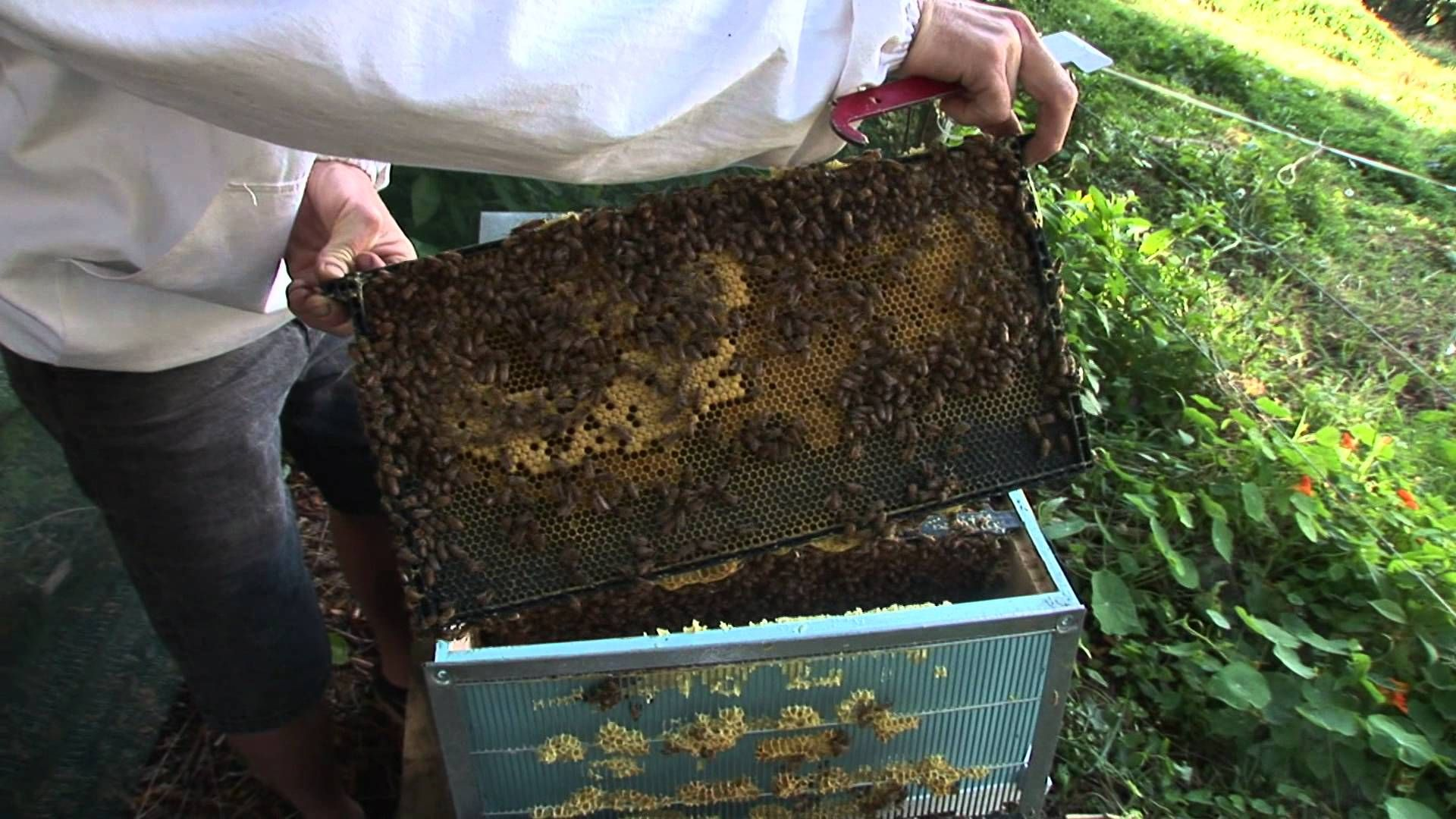 How To Keep Bees The Basics Small Vegetable Gardens Home