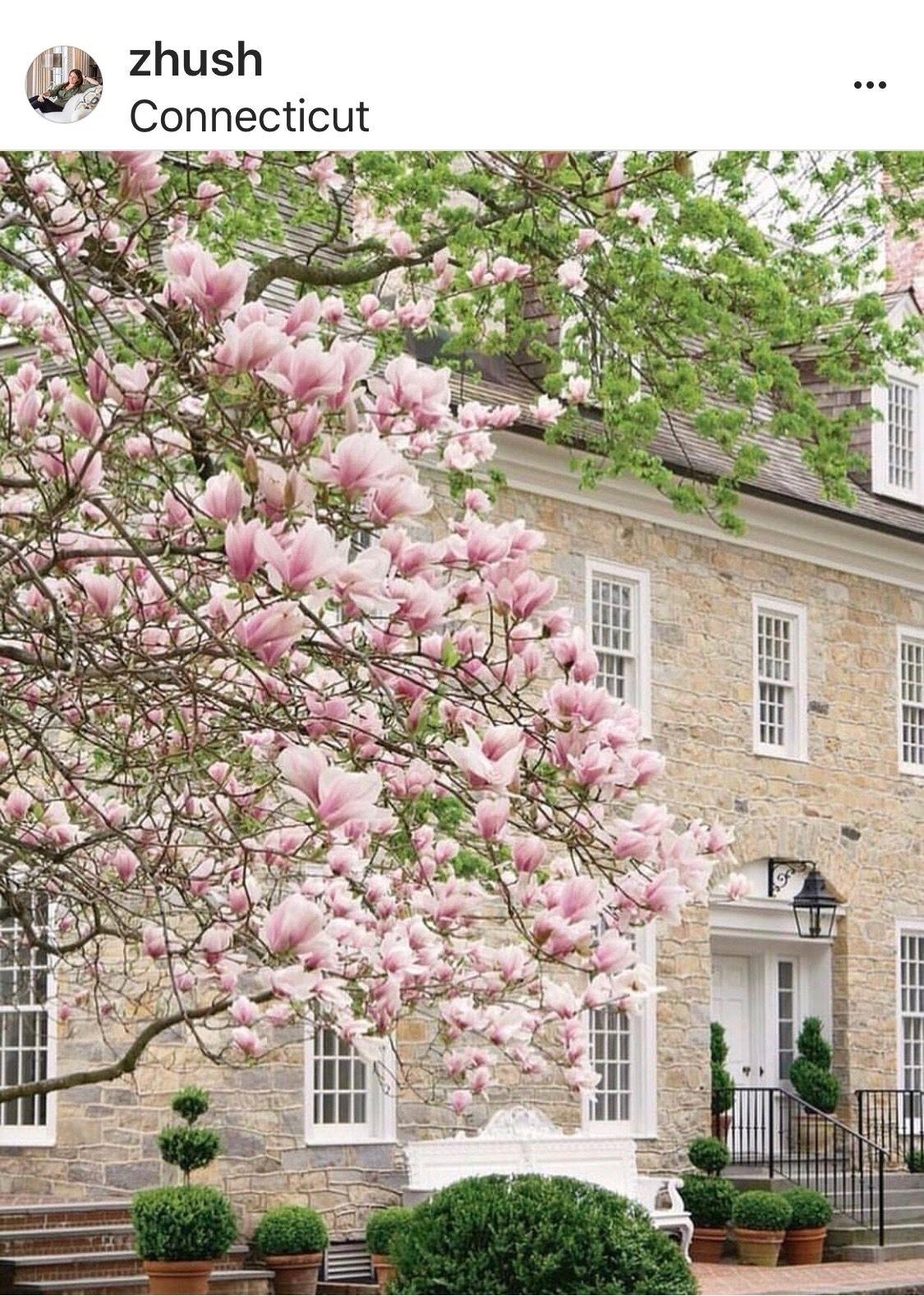Washington Cherry Blossoms Jefferson Memorial Cherry Blossom Festival Cherry Blossom Washington Dc