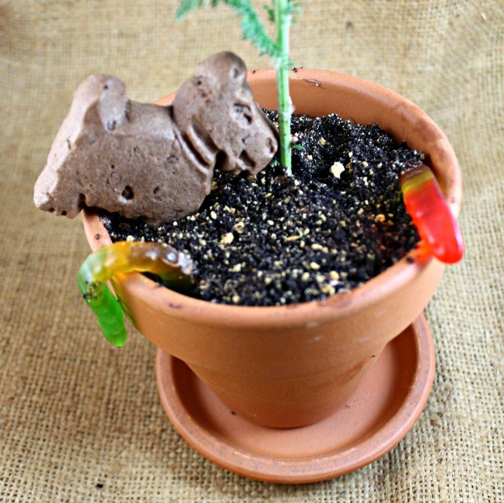\ Dirt\  Flow Pot Dessert & Dirt\u201d Flower Pots | Recipe | Favorite Recipes | Desserts Dirt cake ...