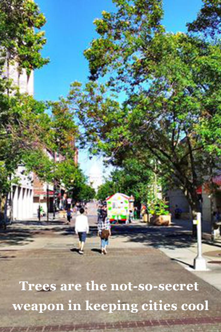 Trees are the notsosecret weapon in keeping cities cool