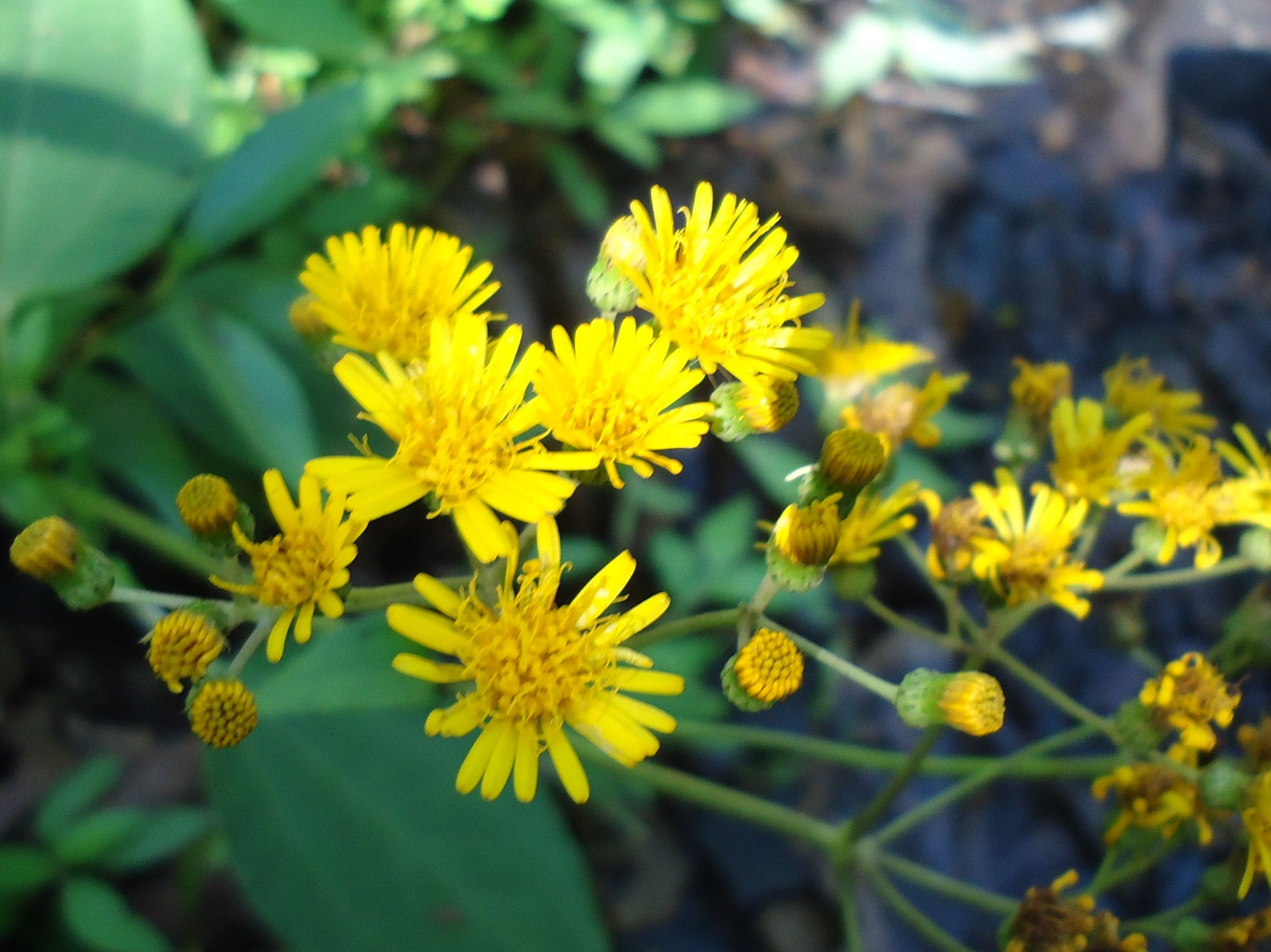 flores de la amazonia