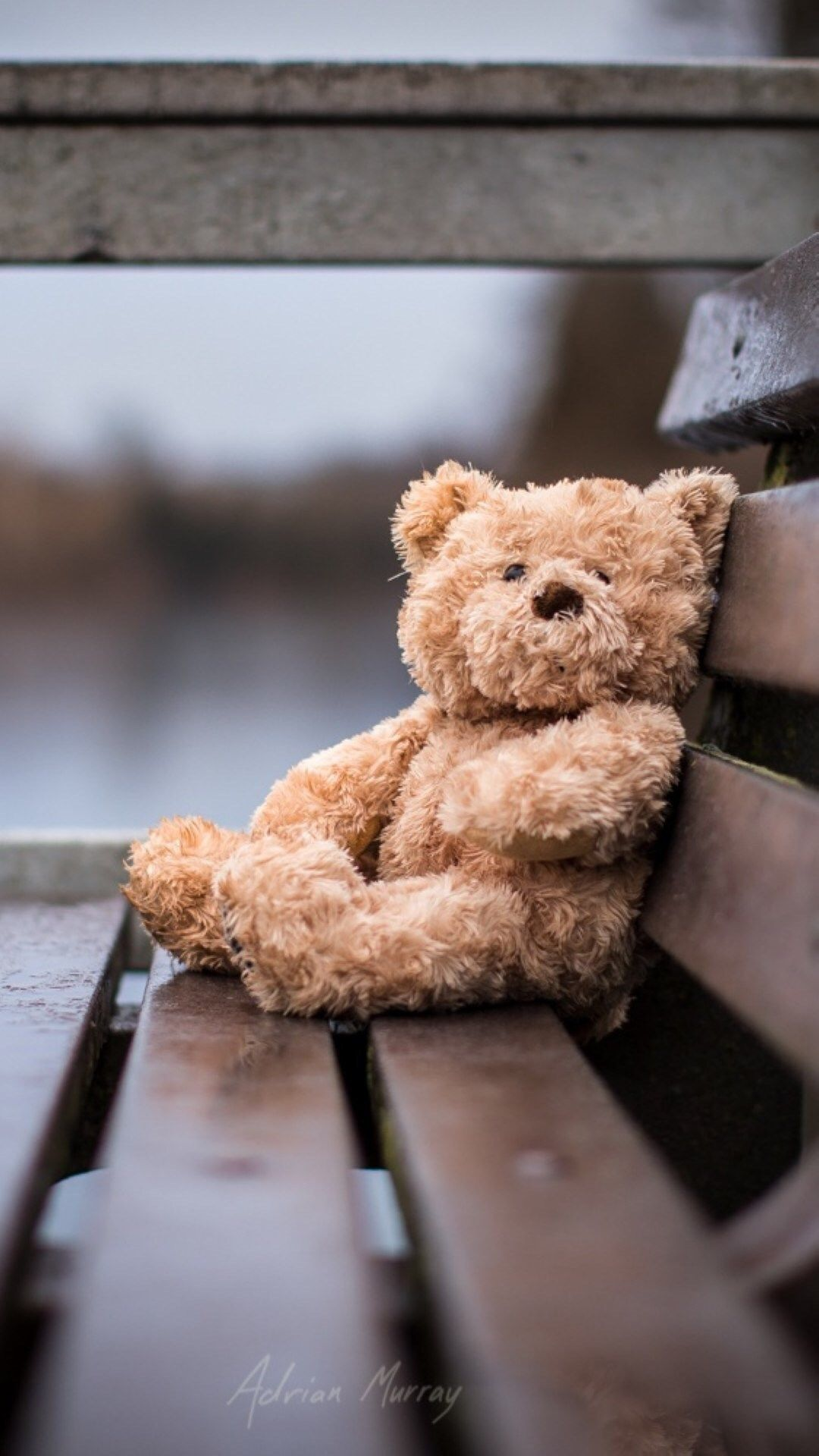 Lonely Bear Bench Gray IPhone 6 Plus Wallpaper