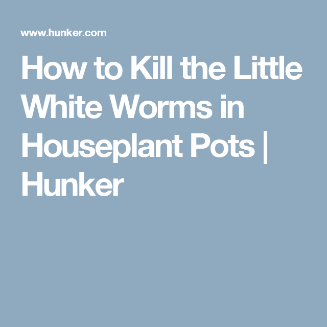 How to Kill the Little White Worms in Houseplant Pots
