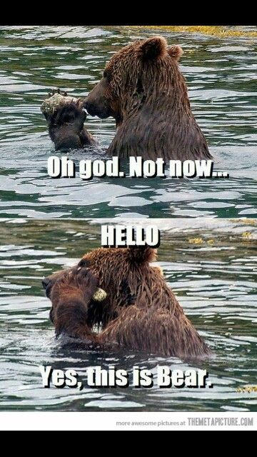 Grizzly bear meme Funny bears, Funny animals, Funny