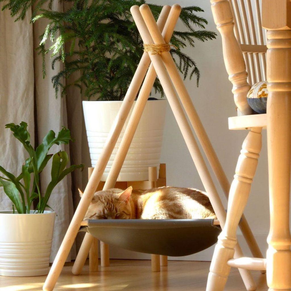 Pour les chats aventuriers, cette société commercialise