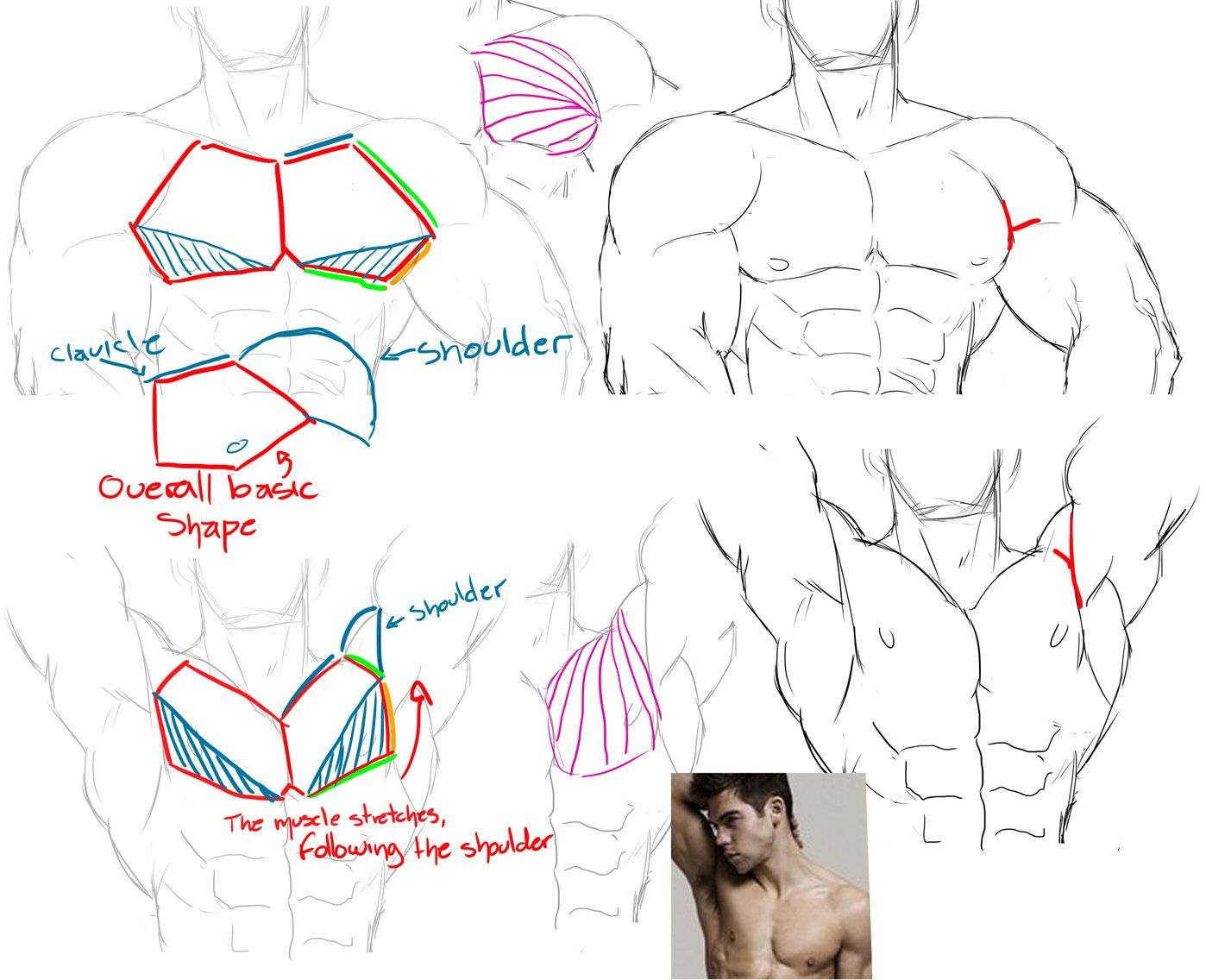 3) Twitter | tutorial | Pinterest | Twitter, Anatomy and Art reference