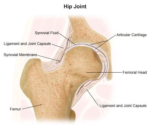 Hip Joint | Two Part Ring Inspiration | Pinterest | Hip joint anatomy