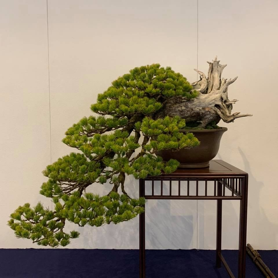 Top 10 Japanese Bonsai Trees With Shocking History Japanese Bonsai Tree Bonsai Tree Japanese Bonsai