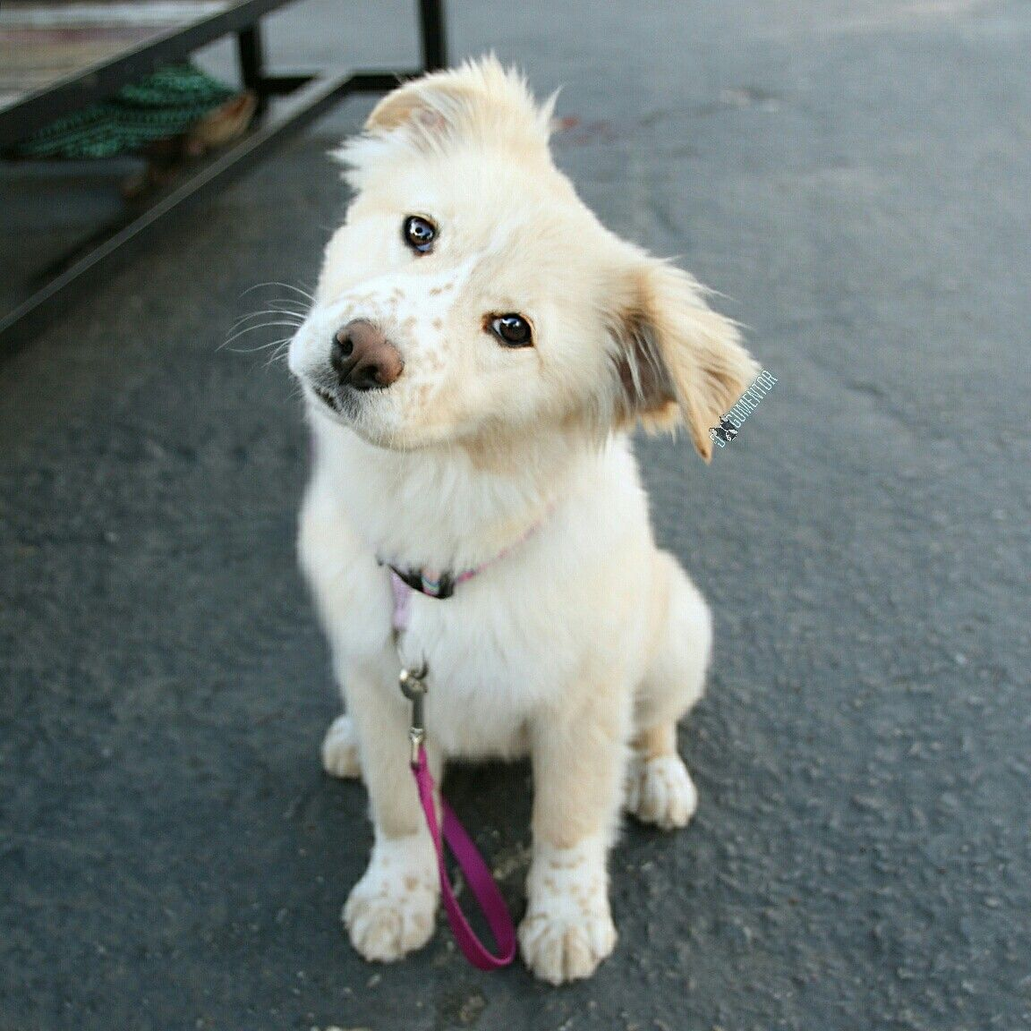 Kayla Golden Retriever Mix 5 M O Quartyard I Got Her On Craigslist Golden Retriever Golden Retriever Mix Retriever Mix
