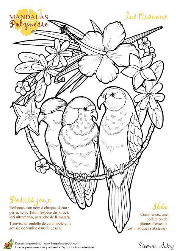 zeichnung mandalas polynesien die vögel  hugolescargot