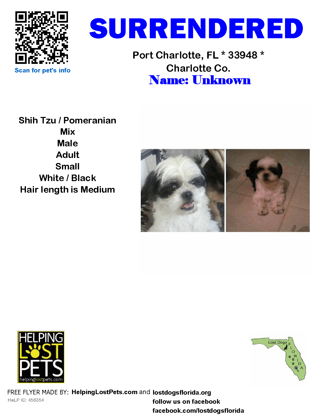 Helping Lost Pets Dog Shih Tzu Surrendered To Ears In Englewood Fl Losing A Pet Pomeranian Mix Shih Tzu