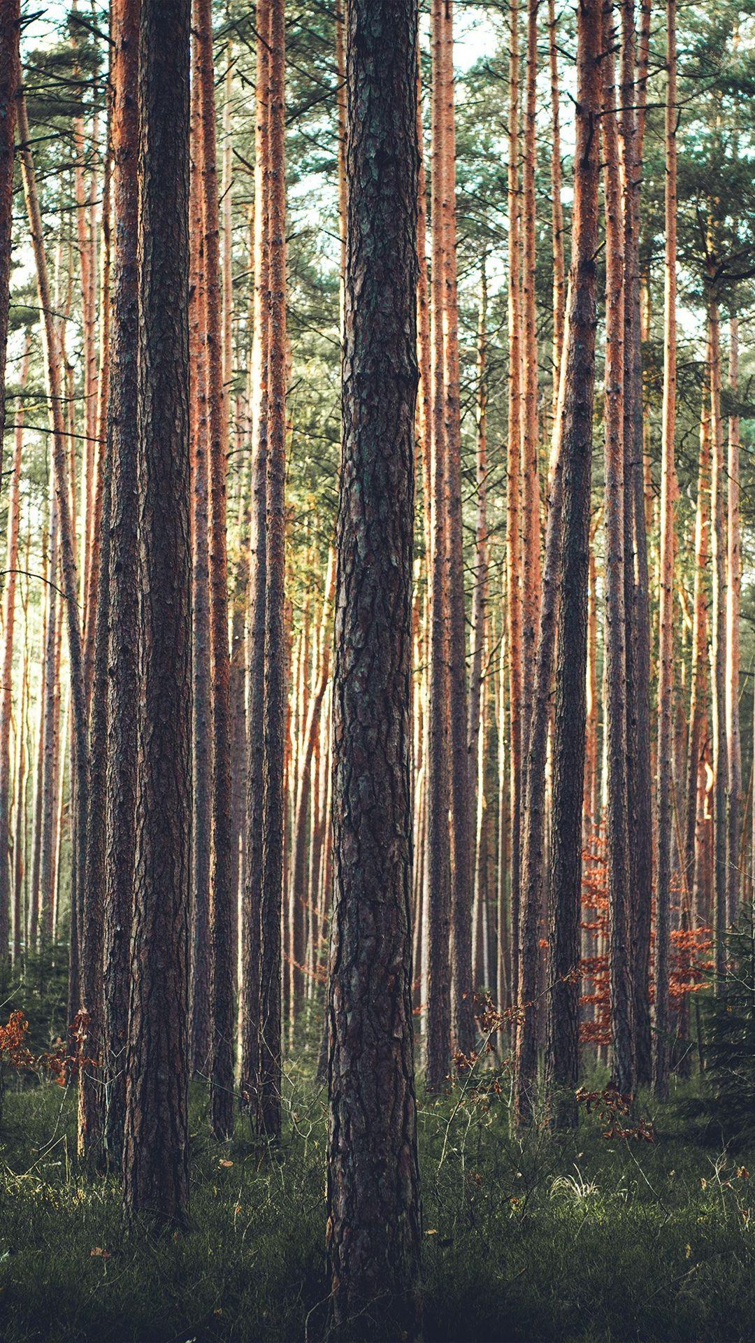 Wood Tree Mountain Summer Nature Green IPhone 6 Plus Wallpaper