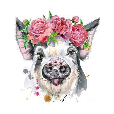 Art Print: Watercolor Portrait of Pig by Natalia Andreichenko : 12x12in