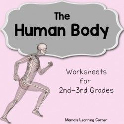 The Human Body Worksheet Packet for 1st-3rd Graders | HOMESCHOOLING ...