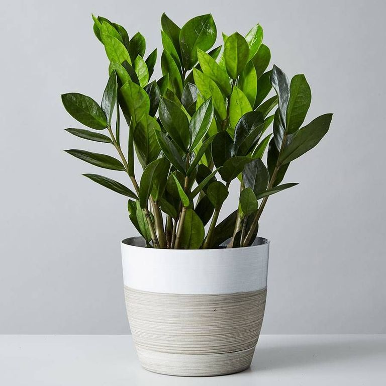 23 Small Indoor Houseplants To Add To Your Collection In 2020 Plant Care Houseplant Small Indoor Plants Small House Plants
