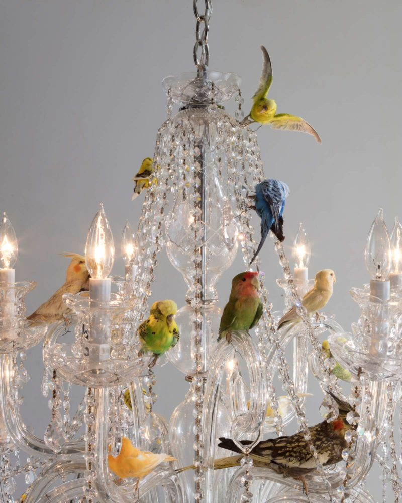Unique Bird Chandelier Small Crystal Chandelier With Taxidermy