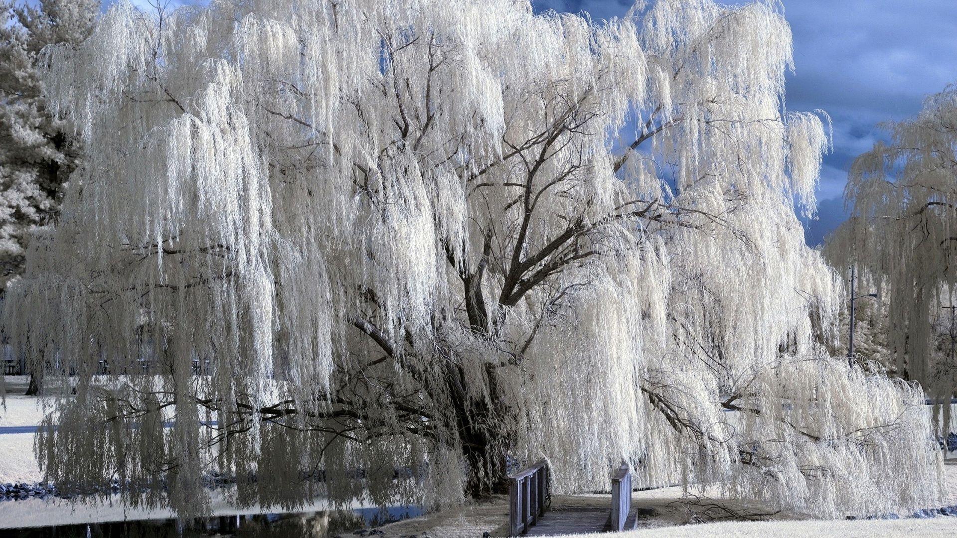 Снежная зима картинки обои