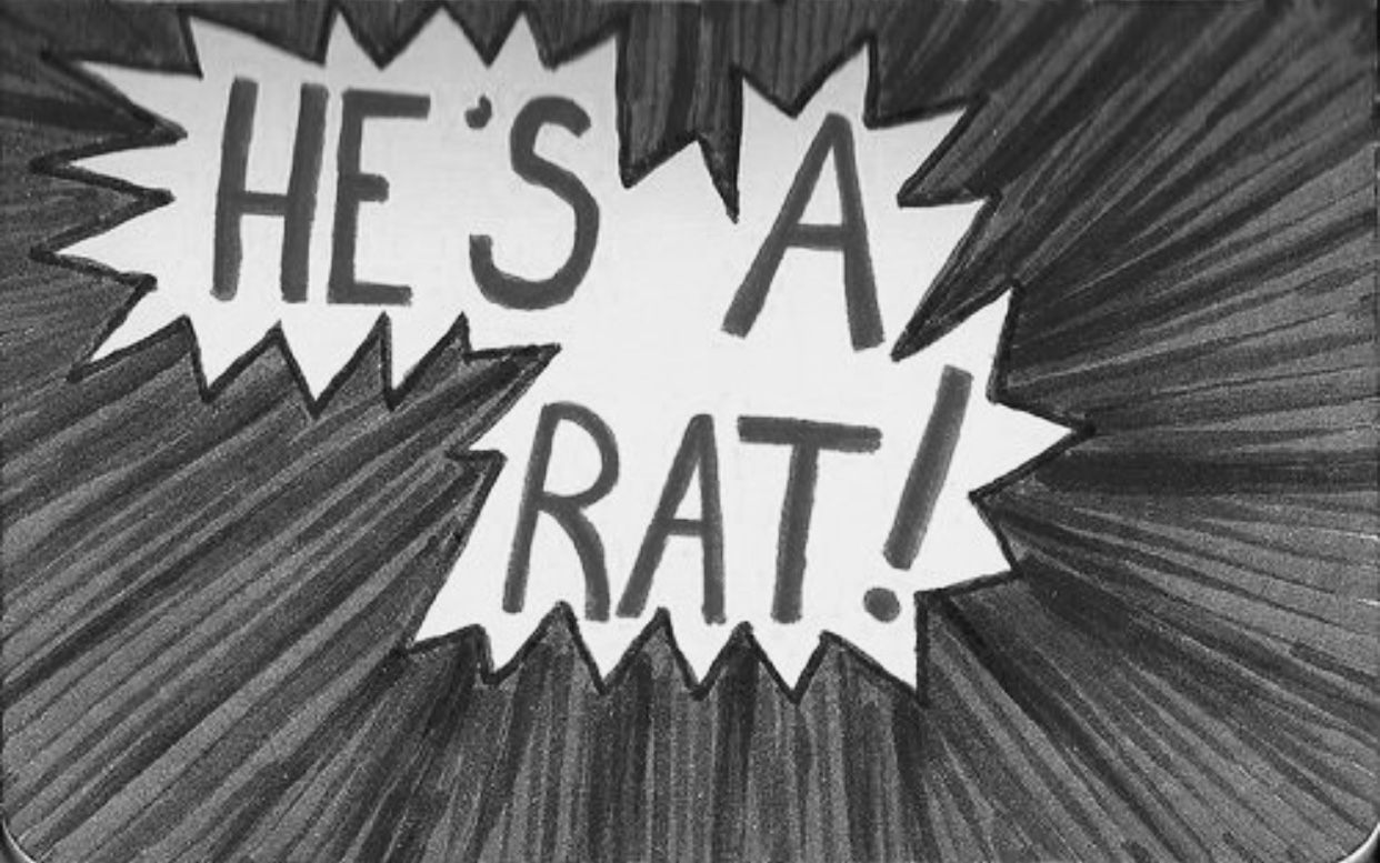 Pin By Katia On Nightman Bird Law My Best Friend Rats