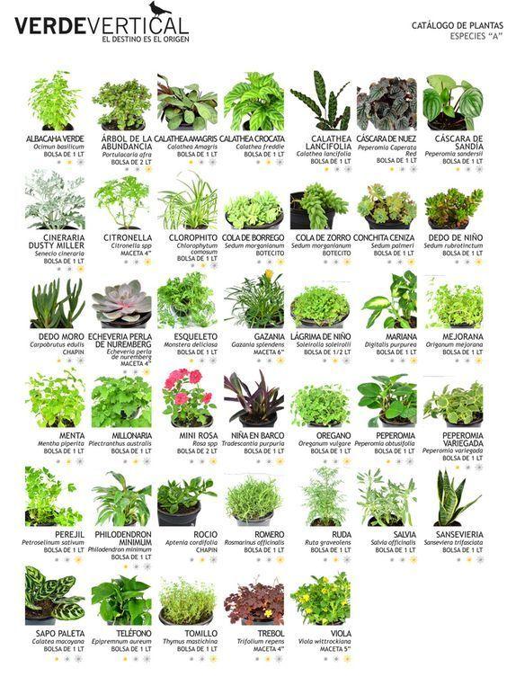 Paleta Vegetal | vertical Gardens - - Jardineria Photo Blog