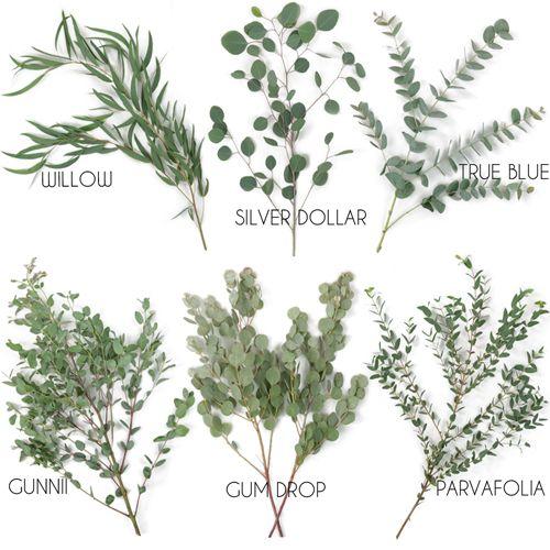 Choose Your Own Eucalyptus Greenery Premium Pack