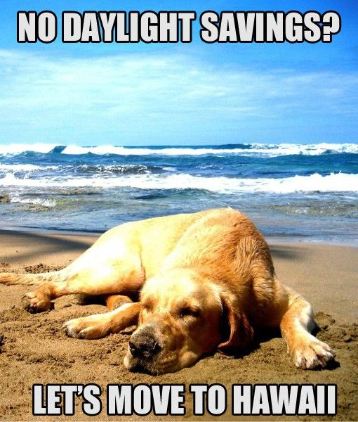 Daylight Savings Times Memes Dog Safe Labrador Retriever Dog Beach