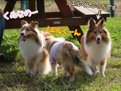 http://blog.livedoor.jp/dh_yosshy/