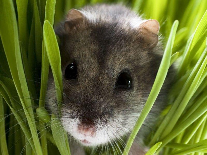 Nager Als Haustiere Klein Und Tierisch Suss Haustiere Tiere