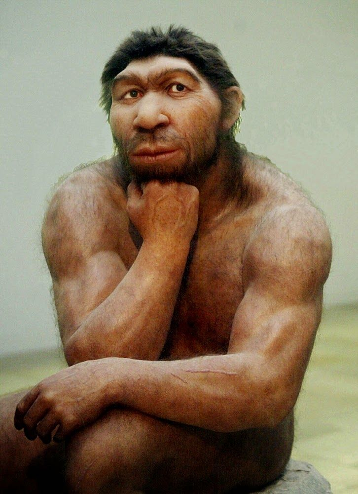 homo neanderthalensis the neanderthals Neanderthals were thought to have died out as modern humans arrived  of  homo neanderthalensis clung on until at least 28,000 years ago,.