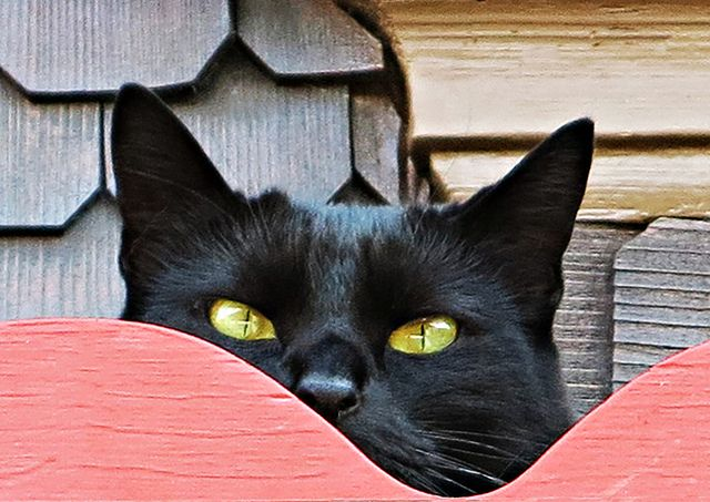 A suspicious glance ~~ by rotraud_71 away fo a while ~~~, via Flickr