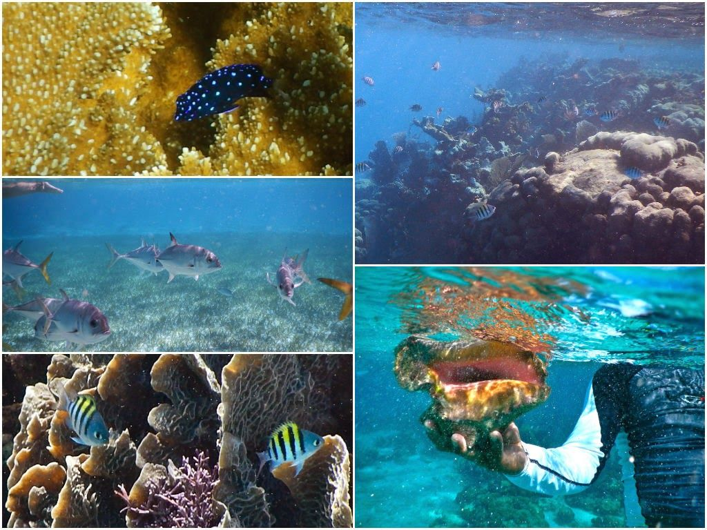 Your Guide to Snorkeling near San Pedro, Belize ~ A Passion and A Passport | A Travel and Adventure Blog
