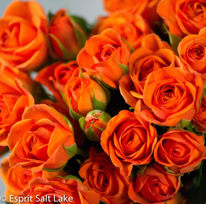 spray rose orange raw roses pinterest sprays and flowers. Black Bedroom Furniture Sets. Home Design Ideas