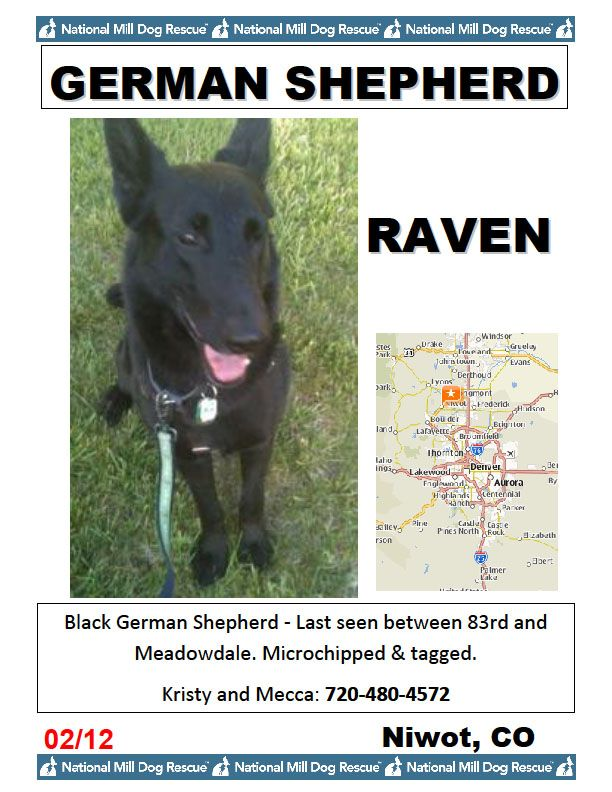 Lost Dog Alert Raven A Black German Shepherd From National Mill