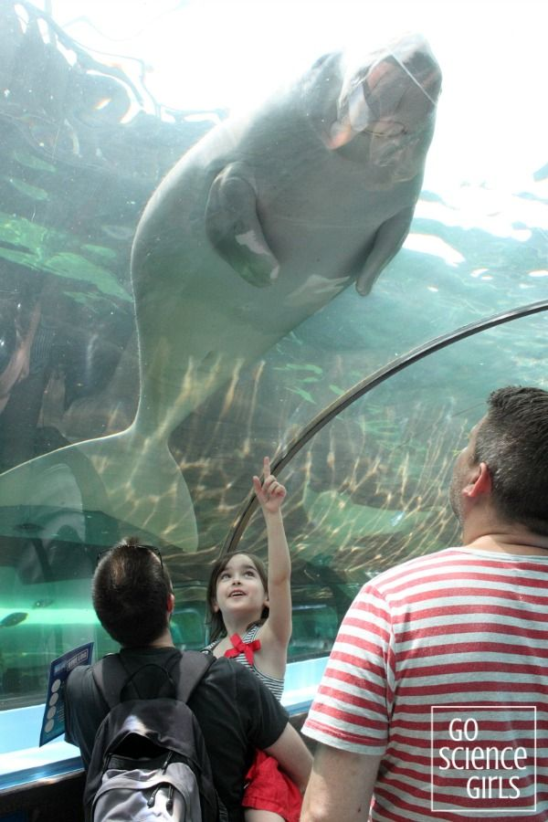 Seeing a dugong at Sydney Aquarium with great details about visiting the aquarium too!