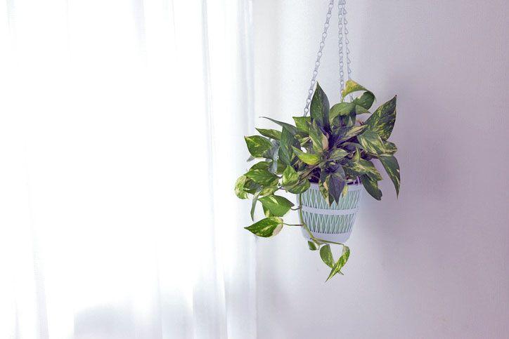 Schlafzimmer Pflanzen ~ Endlich wieder durchschlafen! 7 luftreinigende pflanzen fürs