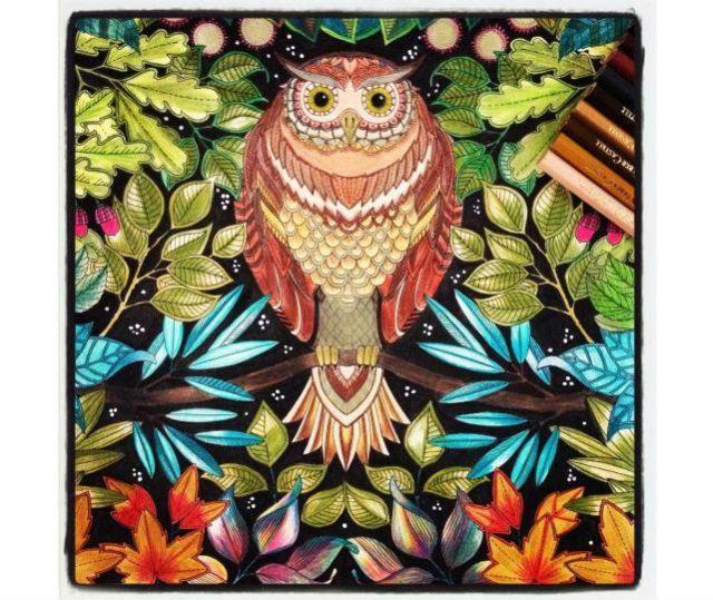 960+ Secret Garden Coloring Book Owl Best HD