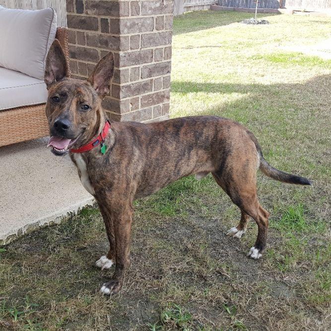 Adopt Luke on Animal shelter, Foster dog, Leopard dog