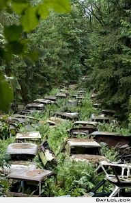 Crazy! This reminds me of The Walking Dead!