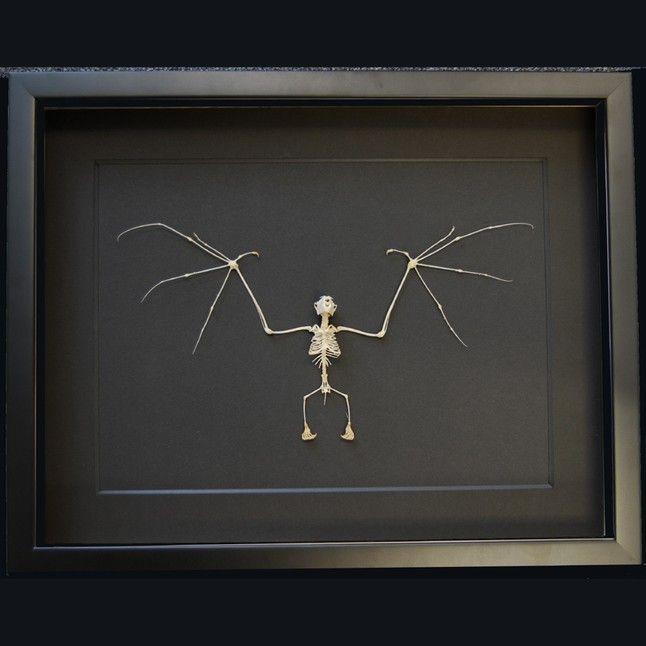 Frame Bat Skeleton From Natur Framed Insects Skulls Minerals